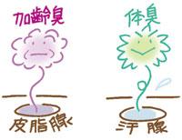 体臭は汗腺から、加齢臭は皮脂腺から発生します